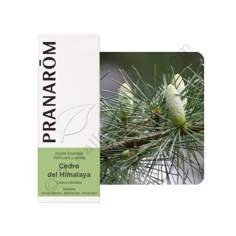 Aceite esencial de Cedro del Himalaya Pranarom