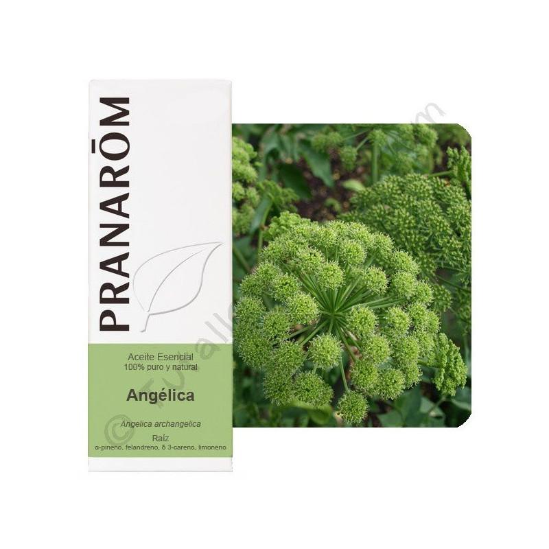Aceite esencial de Angélica Pranarom