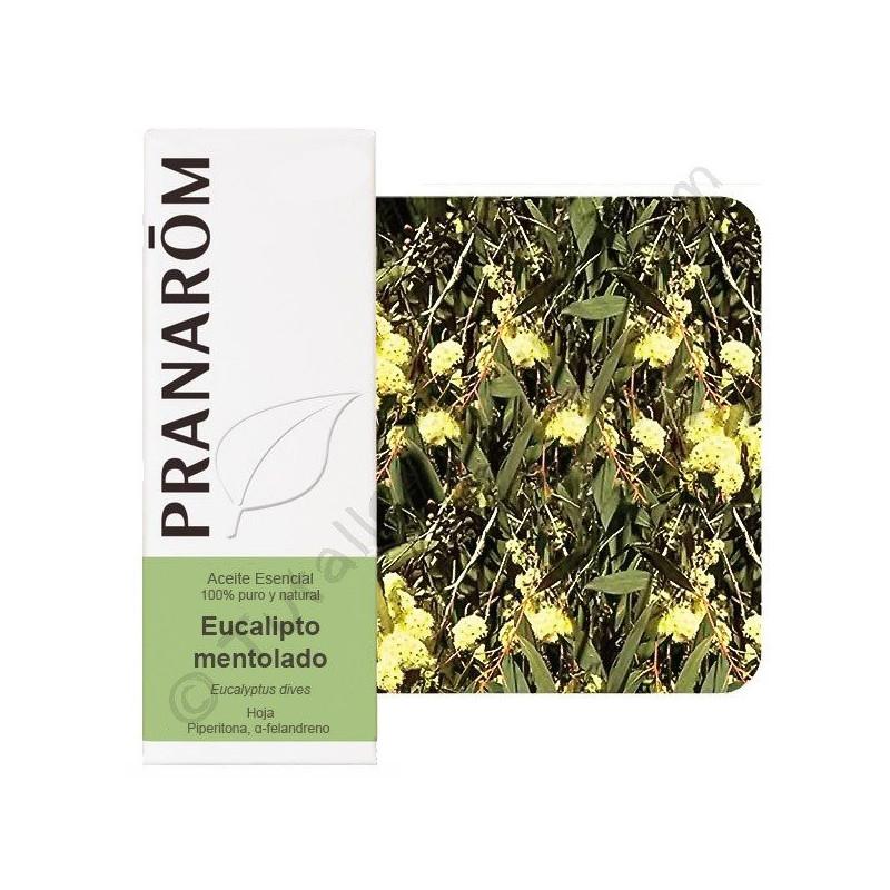 Aceite Esencial de eucalipto mentolado 10ml