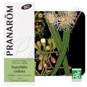 Aceite esencial de eucalipto radiata BIO 10 y 100 ml.