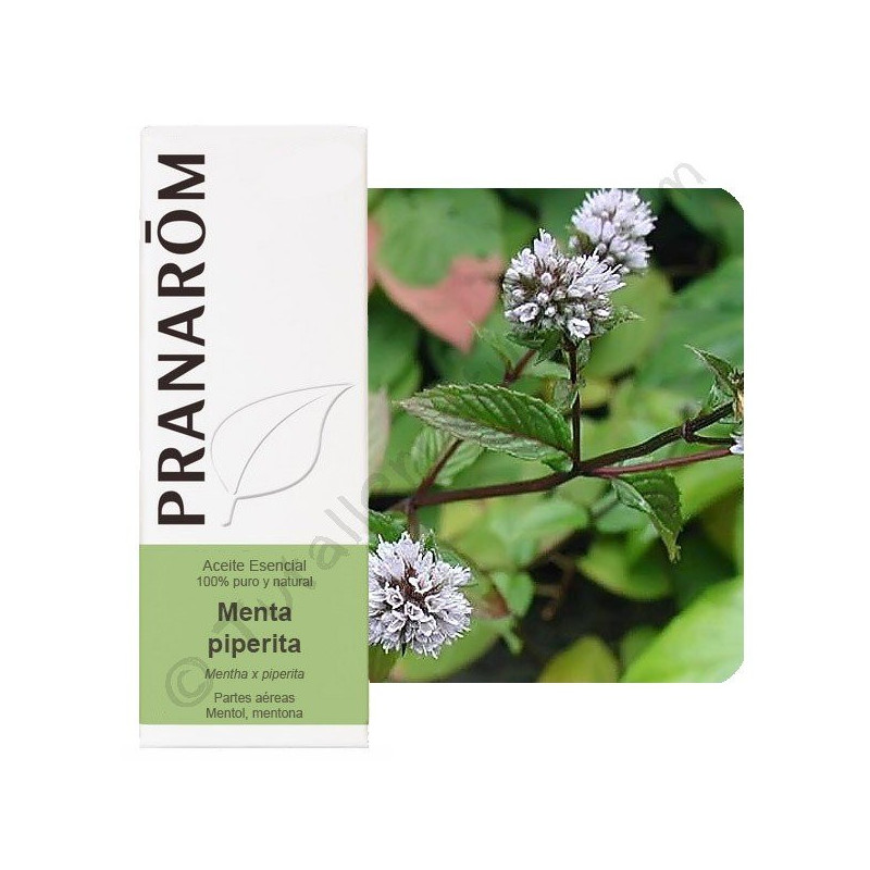 Menta Piperita 10 ml