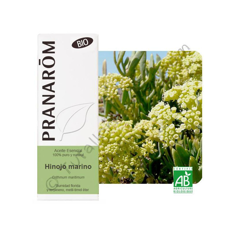Aceite esencial de hinojo marino BIO 5 ml.