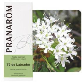 Aceite esencial de té de labrador 5 ml.