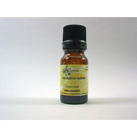 Aceite esencial de eucalipto radiata silvestre 5 y 10 ml.
