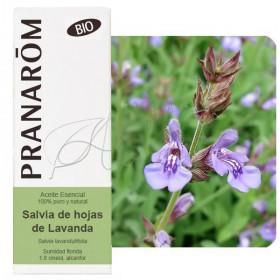 Aceite esencial de salvia de hojas de lavanda o de España BIO 10 ml.