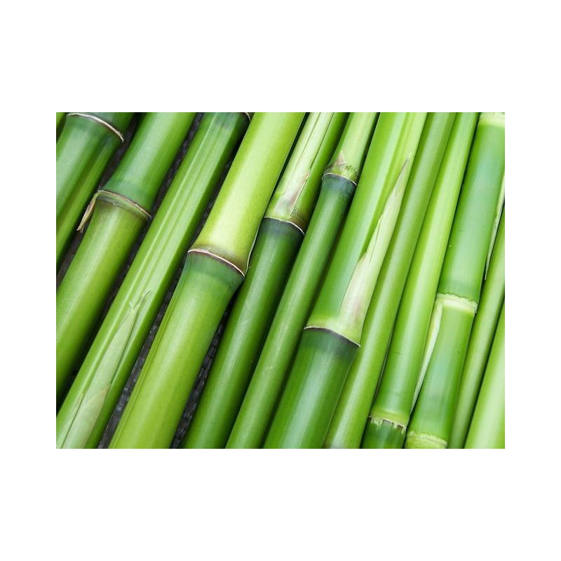 Bambú en polvo 50 gr.